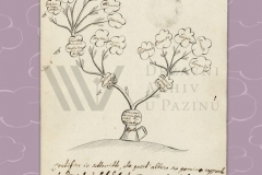 HR-DAPA-12 Pazinska knežija (Graffschaft Mitterburg, Contea di Pisino), 1571/1918[1919/1934], Obiteljsko stablo obitelji de Segher (1826)