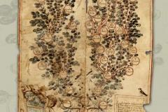 HR-DAPA-797 Zbirka isprava, 1200/1842, 135. Obiteljsko stablo obitelji Filipin koja se doselila iz Zemunika kod Zadra u Poreč 1575 godine (1657)