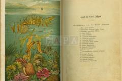 Ambrossi Calepini dictionarium, Mattheaus Bofellus excudere faciebat. 1554.